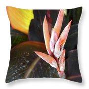 Canna Lilies IIi  Throw Pillow
