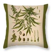 Cannabis Sativa  Throw Pillow