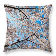 Canopy Of Cherry Blossoms Throw Pillow