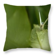 Cant Get Any Alone Time Throw Pillow