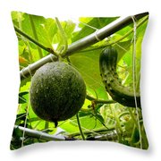 Cantaloupe And Hanging On Tree 1 Throw Pillow