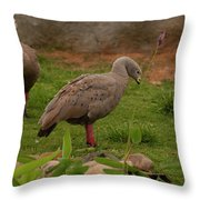 Cape Barren Geese Facing Right Throw Pillow