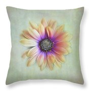 Cape Daisy Looking Up Throw Pillow