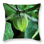 Cape Gooseberry In July Throw Pillow