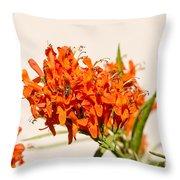 Cape Honeysuckle - The Autumn Bloomer Throw Pillow