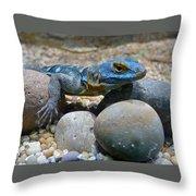 Cape Rock Lizard Throw Pillow