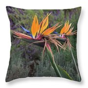 Captivating Bird Of Paradise In Full Bloom Throw Pillow