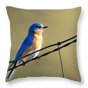 Captivating Blue Throw Pillow