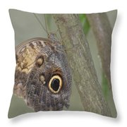 Captivating Photo Of A Brown Morpho Butterfly Throw Pillow
