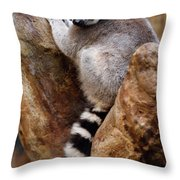 Captive Ring Tailed Lemur Perched In A Stone Tree Throw Pillow