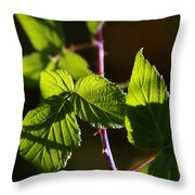 Captured In Morning Light Throw Pillow