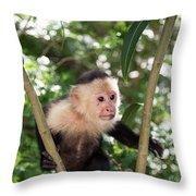 Capuchin II Throw Pillow