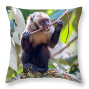 Capuchin Monkey Chewing On A Stick Throw Pillow