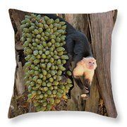 Capuchin Monkey Lunch Throw Pillow
