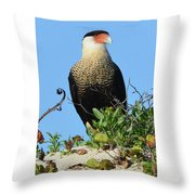 Caracara Portrait Throw Pillow