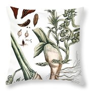 Cardamom, 1735 Throw Pillow