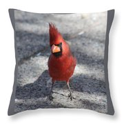 Cardinal 032714a Throw Pillow