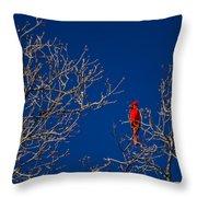 Cardinal Against Blue Sky Throw Pillow