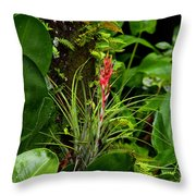 Cardinal Airplant Throw Pillow