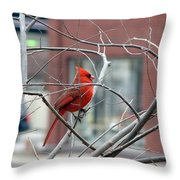 Cardinal Amid The Twigs Throw Pillow