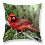 Cardinal Attitude Throw Pillow