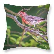 Cardinal Bird In The Wild In South Carolina Throw Pillow