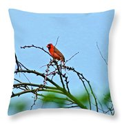 Cardinal Calling Throw Pillow