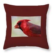 Cardinal Closeup D-bn2 Throw Pillow