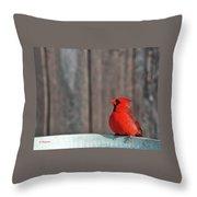 Cardinal Drinking Throw Pillow