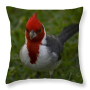 Cardinal Front View In Grass Throw Pillow