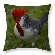 Cardinal Grazing In Grass Throw Pillow