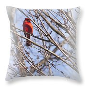 Cardinal I Throw Pillow