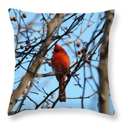 Cardinal II Throw Pillow