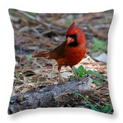 Cardinal In Charge Throw Pillow by Julie Cameron