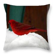 Cardinal In Snow II Throw Pillow