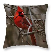 Cardinal In Spring Throw Pillow