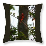 Cardinal In The Crepe Myrtle Throw Pillow