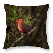 Cardinal In The Spotlight Throw Pillow