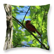 Cardinal In The Springtime Throw Pillow