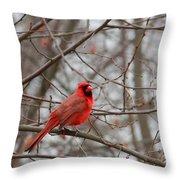 Cardinal In The Winter Throw Pillow