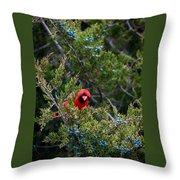Cardinal Lunch Throw Pillow