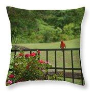 Cardinal On Fence Throw Pillow