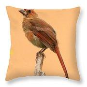 Cardinal Portrait Throw Pillow by Karen Lindquist
