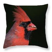 Cardinal Portrait Throw Pillow