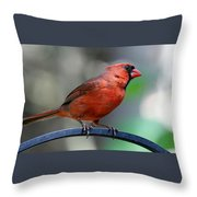 Cardinal Profile Throw Pillow