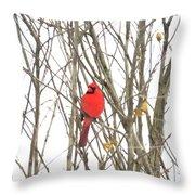 Cardinal Resting Throw Pillow