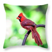 Cardinal Rule Throw Pillow
