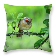 Cardinal Ways Throw Pillow