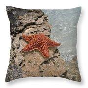 Caribbean Starfish Throw Pillow