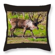 Caribou Antlers In Velvet Throw Pillow